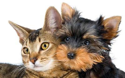 Animali domestici in condominio.